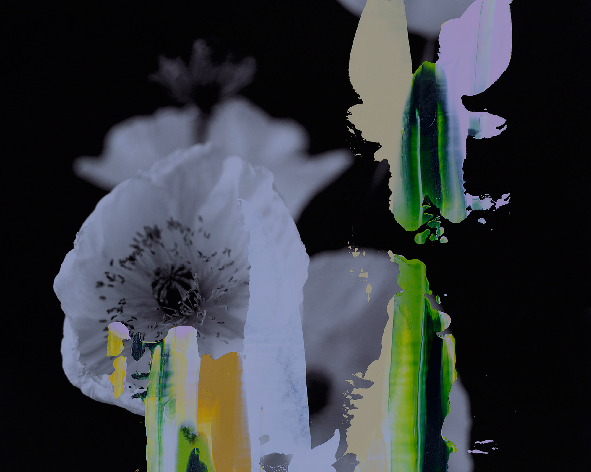 Colourful paint over a black and white picture of poppies